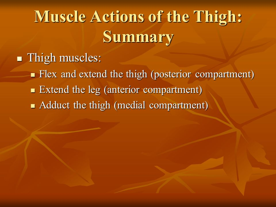 Muscle Actions of the Thigh: Summary Thigh muscles: Thigh muscles: Flex and extend the thigh (posterior compartment) Flex and extend the thigh (poster