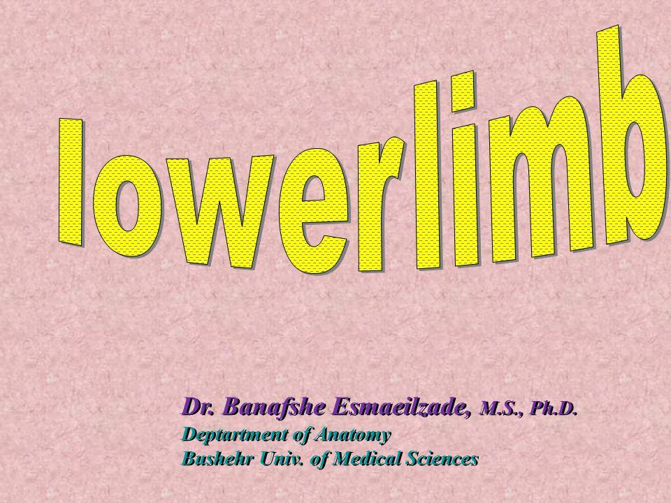 Dr.Banafshe Esmaeilzade, M.S., Ph.D. Deptartment of Anatomy Bushehr Univ.