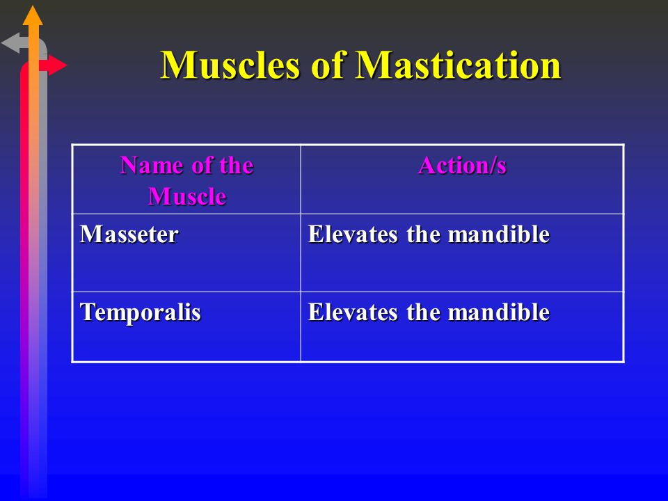 Muscles of Mastication Name of the Muscle Action/s Masseter Elevates the mandible Temporalis