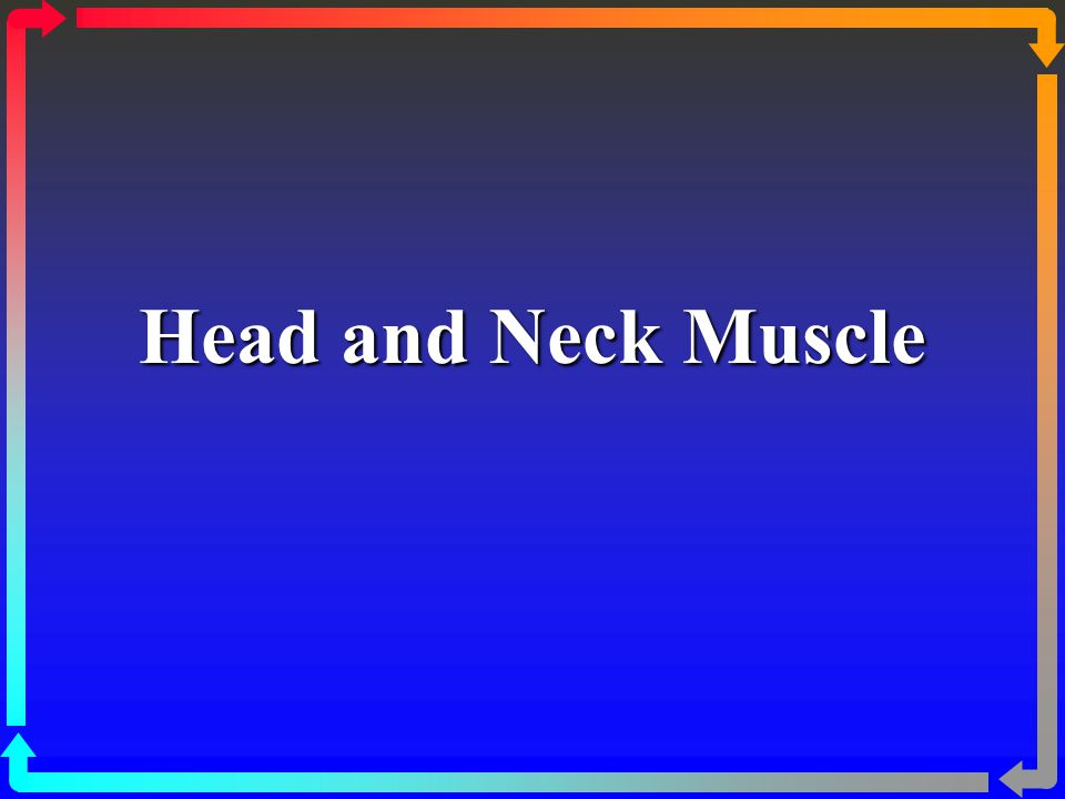 Infrahyoid Muscles Name of the Muscle Action/s Sternohyoid Depresses hyoid Sternothyroid Depresses thyroid cartilage Thyohyoid Depresses hyoid bone, elevates larynx