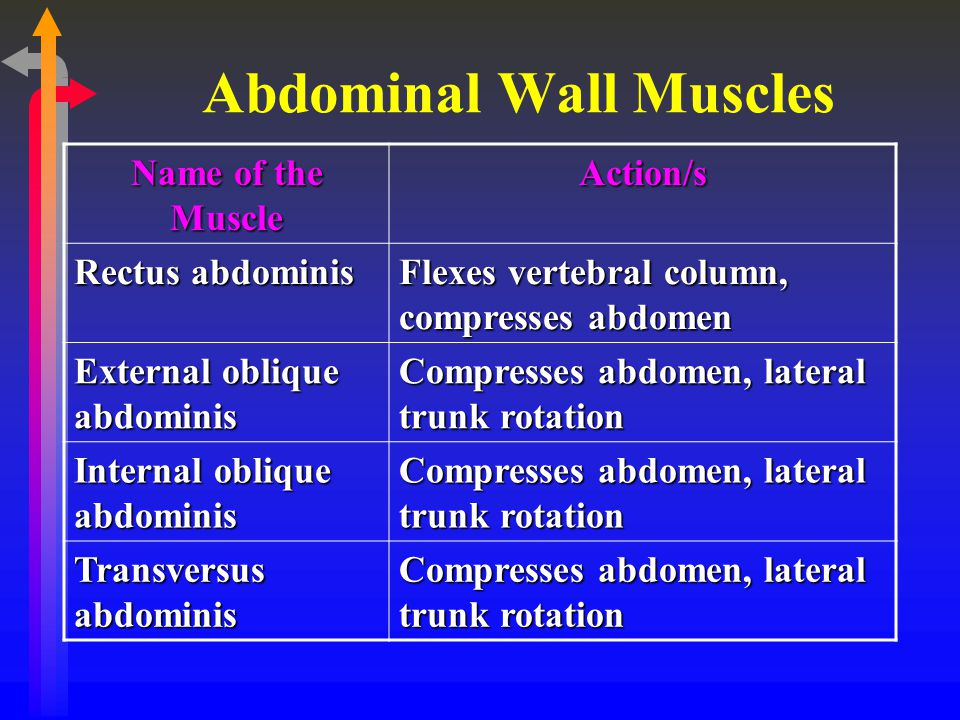 Abdominal Wall Muscles Name of the Muscle Action/s Rectus abdominis Flexes vertebral column, compresses abdomen External oblique abdominis Compresses