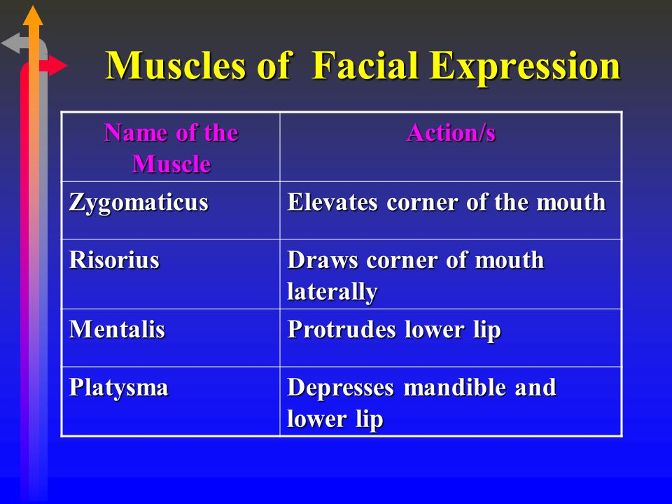 Muscles of Facial Expression Name of the Muscle Action/s Zygomaticus Elevates corner of the mouth Risorius Draws corner of mouth laterally Mentalis Pr