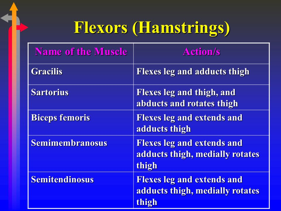 Flexors (Hamstrings) Name of the Muscle Action/s Gracilis Flexes leg and adducts thigh Sartorius Flexes leg and thigh, and abducts and rotates thigh B