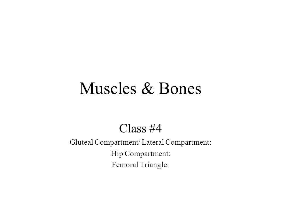 Muscles & Bones Class #4 Gluteal Compartment/ Lateral Compartment: Hip Compartment: Femoral Triangle: