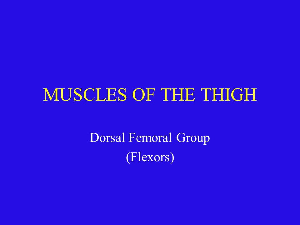 MUSCLES OF THE THIGH Dorsal Femoral Group (Flexors)