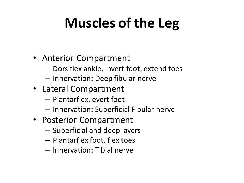 Anterior Compartment Tibialis anterior – Origin - tibia – Insertion - tarsals – Action - dorsiflexion, foot inversion Extensor digitorum longus – Origin – tibia and fibula – Insertion - phalanges – Action – toe extension Extensor hallucis longus – Origin – fibula, interosseous membrane – Insertion – big toe – Action - extend big toe, dorsiflex foot All innervated by deep fibular nerve