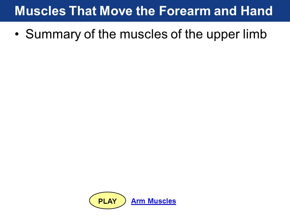 PLAY Arm Muscles Muscles That Move the Forearm and Hand Summary of the muscles of the upper limb