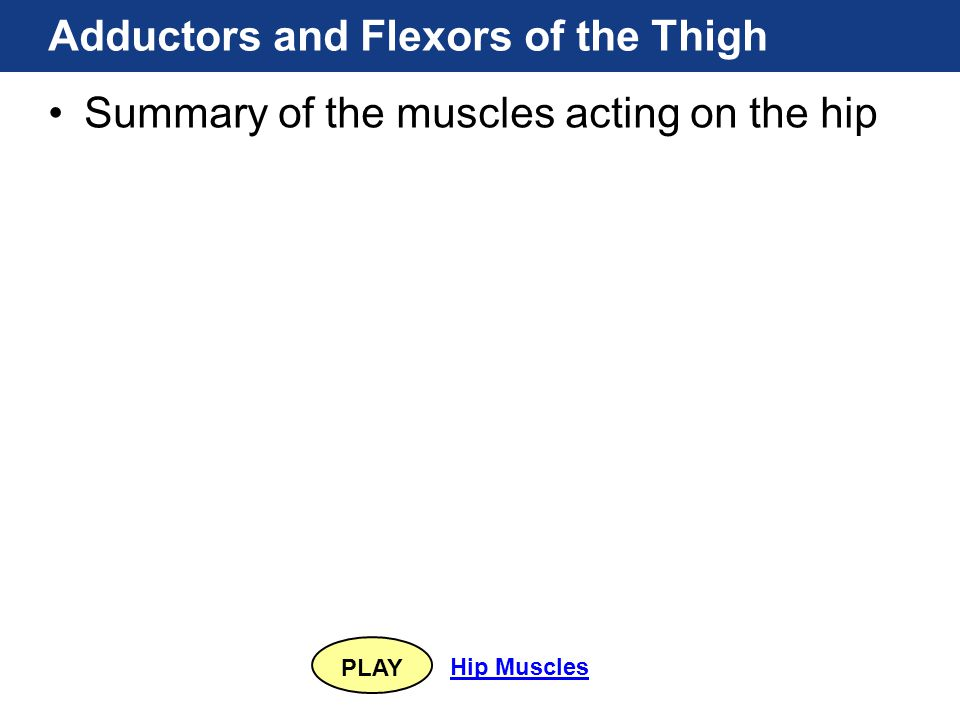 PLAY Hip Muscles Adductors and Flexors of the Thigh Summary of the muscles acting on the hip