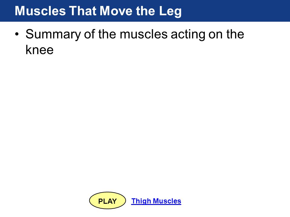 PLAY Thigh Muscles Muscles That Move the Leg Summary of the muscles acting on the knee