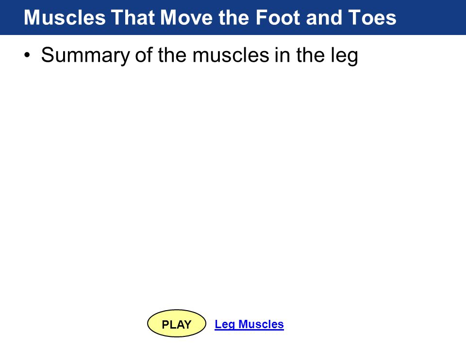 PLAY Leg Muscles Muscles That Move the Foot and Toes Summary of the muscles in the leg