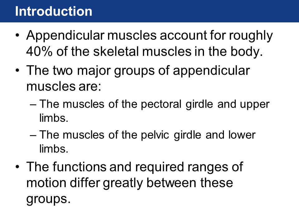 Introduction Appendicular muscles account for roughly 40% of the skeletal muscles in the body.