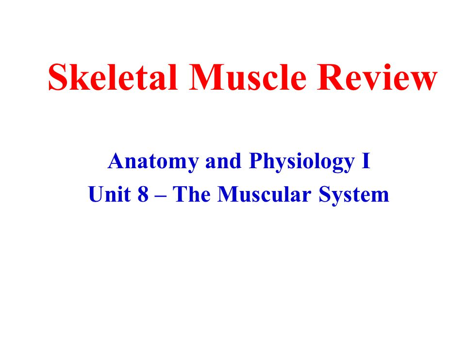 Skeletal Muscle Review Anatomy and Physiology I Unit 8 – The Muscular System