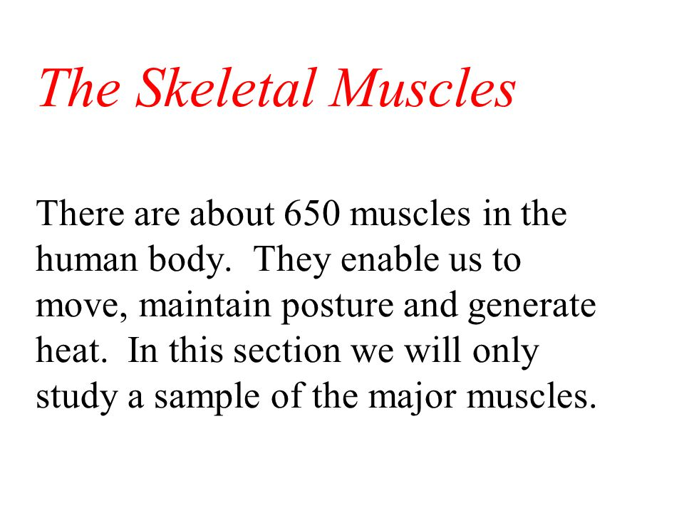 Flexion Types of Musculo-Skeletal Movement