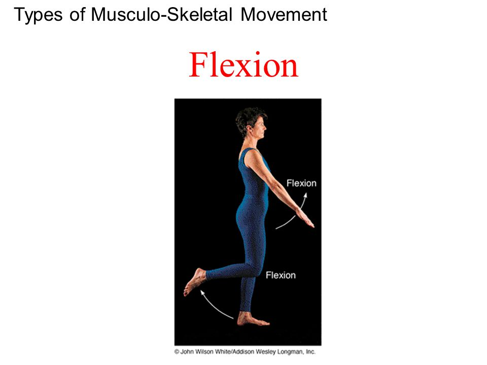 Deltoid Abduct, Flex & Extend Arm