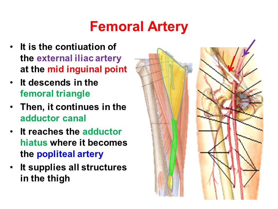 Anastomosis around the Ankle Joint Is formed by the following branches: Calcanean branches of posterior tibial and peroneal arteries Medial and lateral malleolar branches of anterior tibial artery Malleolar branches of posterior tibial and peroneal arteries