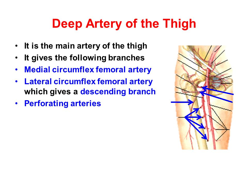 Popliteal Artery It is the continuation of the femoral artery at the adductor hiatus It runs through the popliteal fossa It ends at the lower border of the popliteus muscle by dividing into its terminal branches It gives the following branches: Medial superior genicular artery Lateral superior genicular artery Medial inferior genicular artery Lateral inferior genicular artery Middle genicular artery