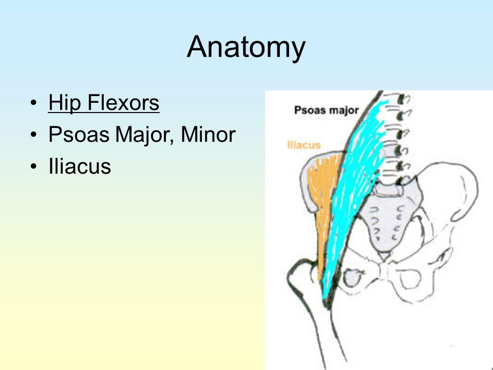 Anatomy Hip Flexors Psoas Major, Minor Iliacus