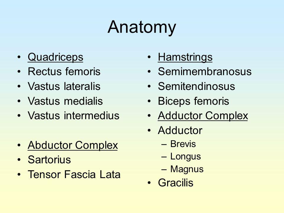 Anatomy Quadriceps Rectus femoris Vastus lateralis Vastus medialis Vastus intermedius Abductor Complex Sartorius Tensor Fascia Lata Hamstrings Semimem