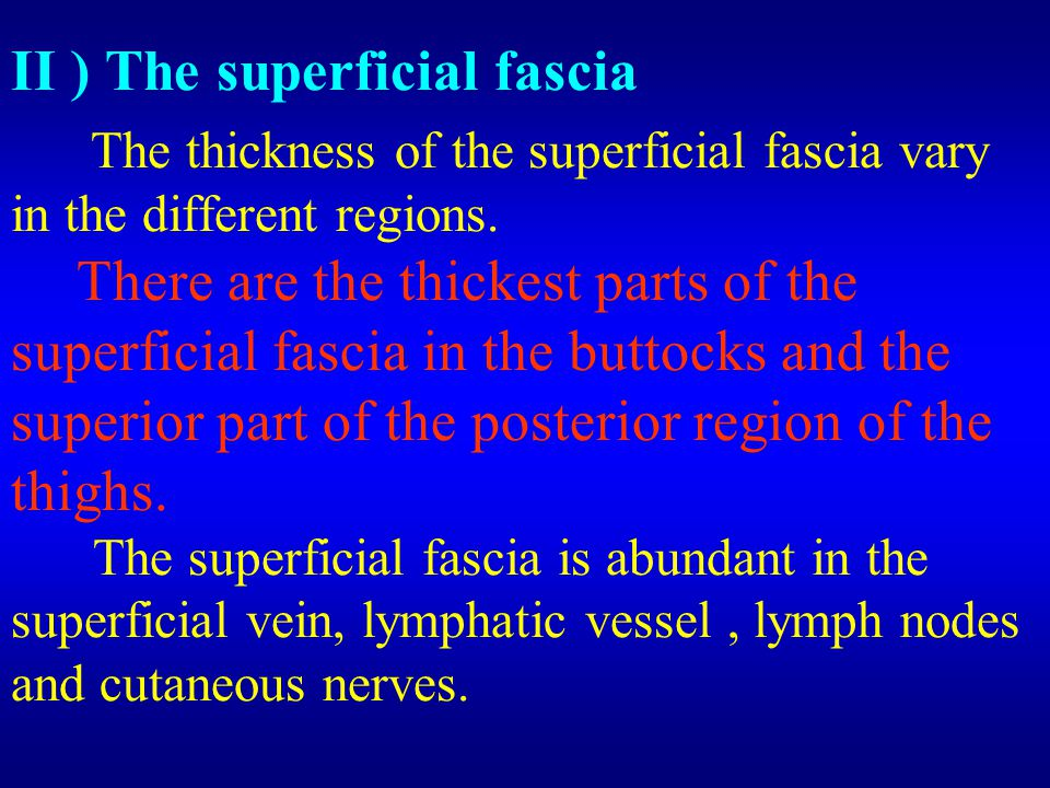  ) The deep fascia The deep fascia is the compact(dense) and tenacity.