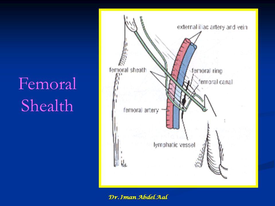 Femoral Shealth