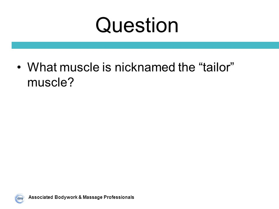 Associated Bodywork & Massage Professionals Question What muscle is nicknamed the tailor muscle