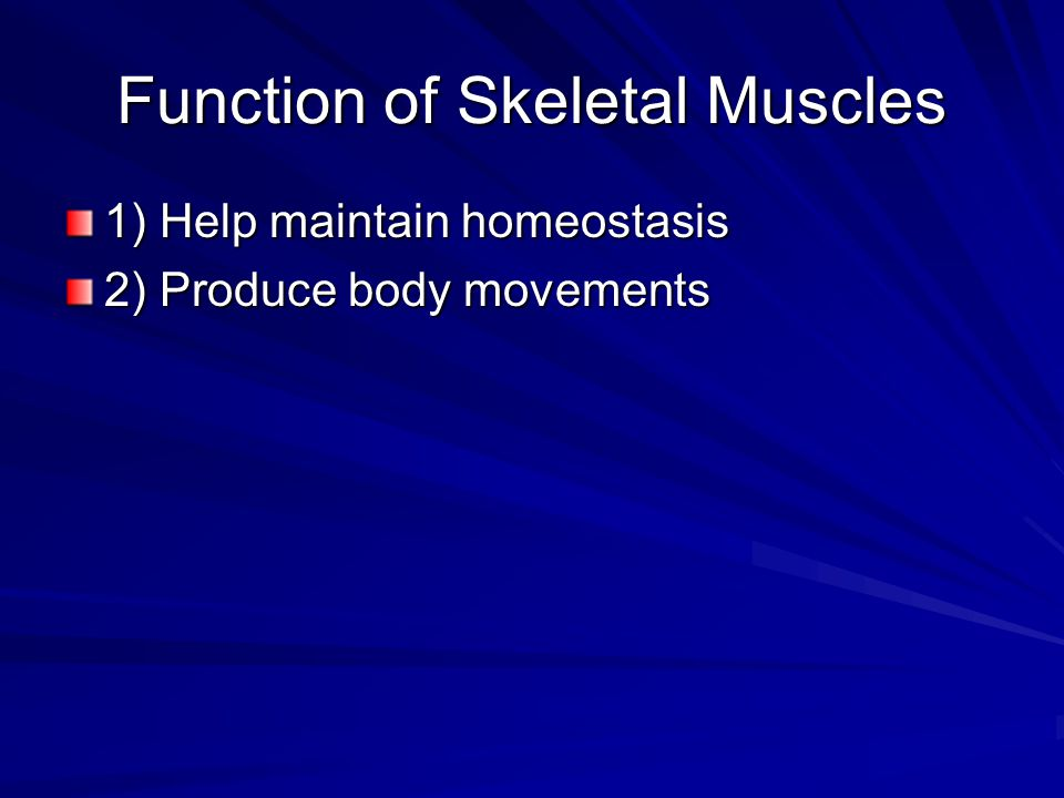 Skeletal Muscles There are more than 600 muscles in the body.