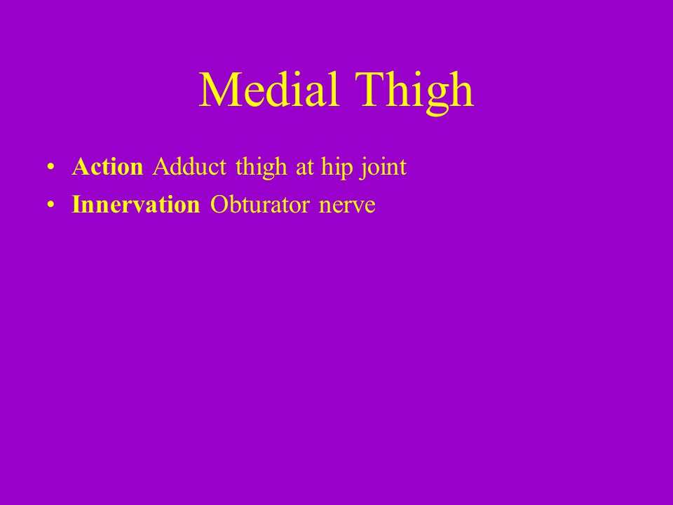 Medial Thigh Action Adduct thigh at hip joint Innervation Obturator nerve