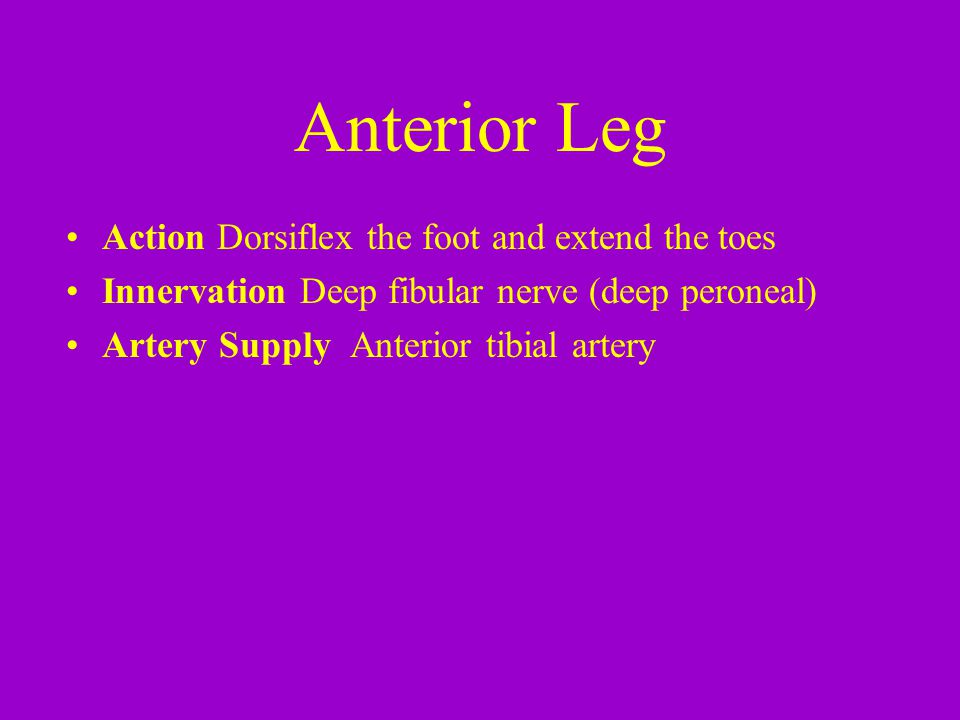 Anterior Leg Action Dorsiflex the foot and extend the toes Innervation Deep fibular nerve (deep peroneal) Artery Supply Anterior tibial artery