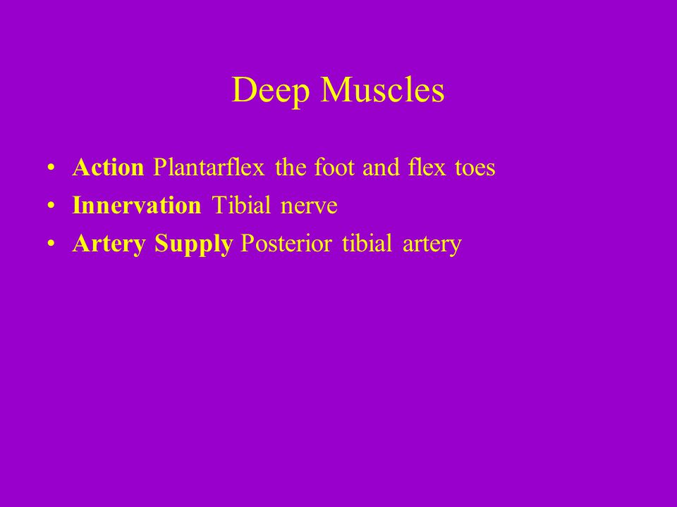 Deep Muscles Action Plantarflex the foot and flex toes Innervation Tibial nerve Artery Supply Posterior tibial artery
