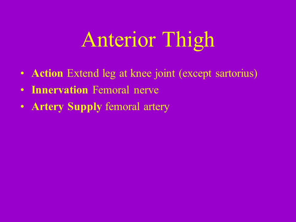 Anterior Thigh Action Extend leg at knee joint (except sartorius) Innervation Femoral nerve Artery Supply femoral artery