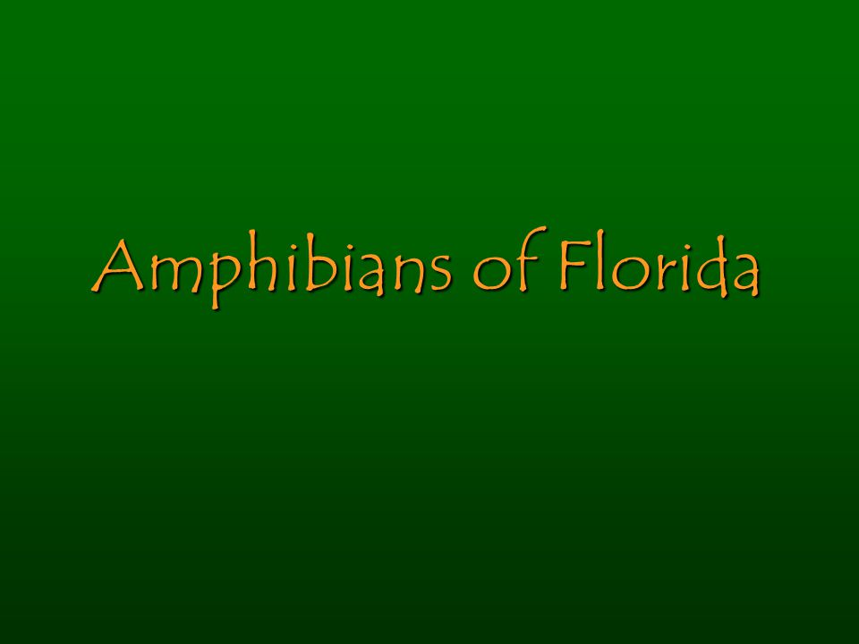 Amphibians of Florida