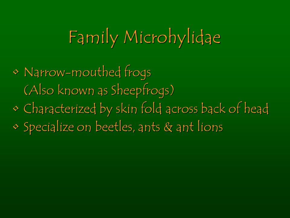 Family Microhylidae Narrow-mouthed frogsNarrow-mouthed frogs (Also known as Sheepfrogs) Characterized by skin fold across back of headCharacterized by skin fold across back of head Specialize on beetles, ants & ant lionsSpecialize on beetles, ants & ant lions