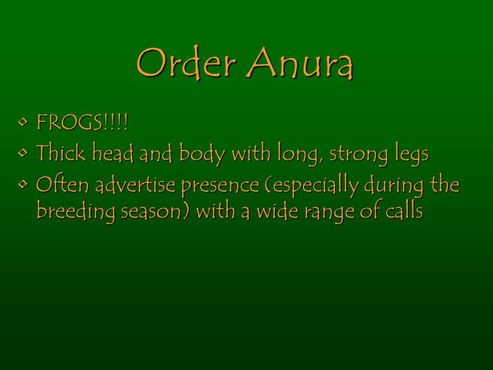 Order Anura FROGS!!!!FROGS!!!.