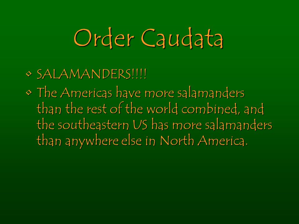 Order Caudata SALAMANDERS!!!!SALAMANDERS!!!! The Americas have more salamanders than the rest of the world combined, and the southeastern US has more