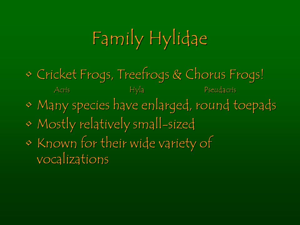 Family Hylidae Cricket Frogs, Treefrogs & Chorus Frogs!Cricket Frogs, Treefrogs & Chorus Frogs.