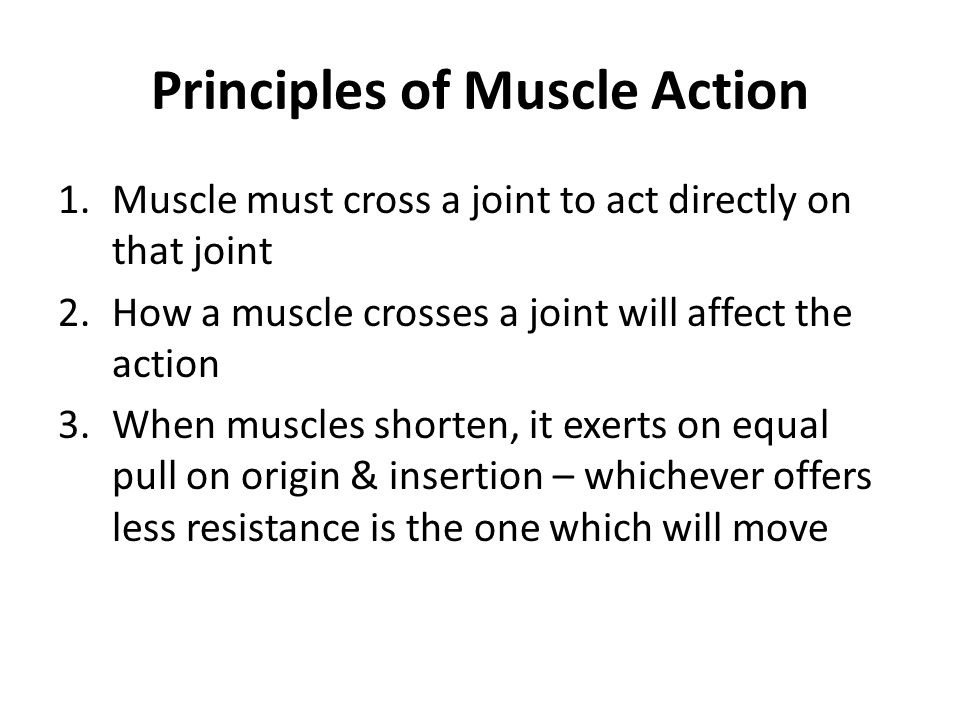 Principles of Muscle Action 1.Muscle must cross a joint to act directly on that joint 2.How a muscle crosses a joint will affect the action 3.When mus