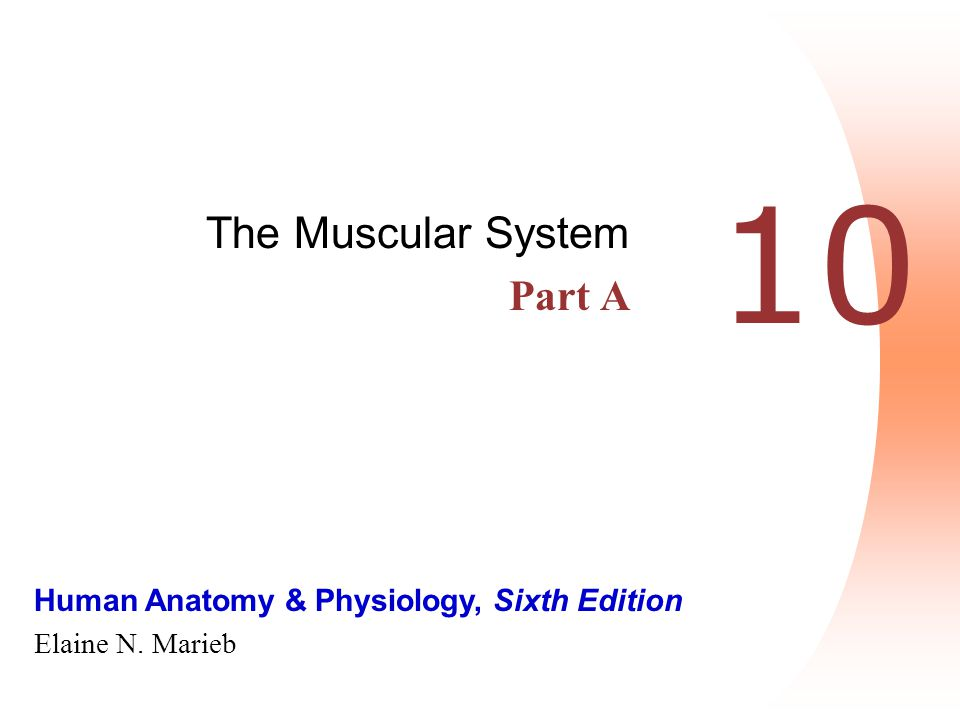 Human Anatomy & Physiology, Sixth Edition Elaine N. Marieb 10 The Muscular System Part A