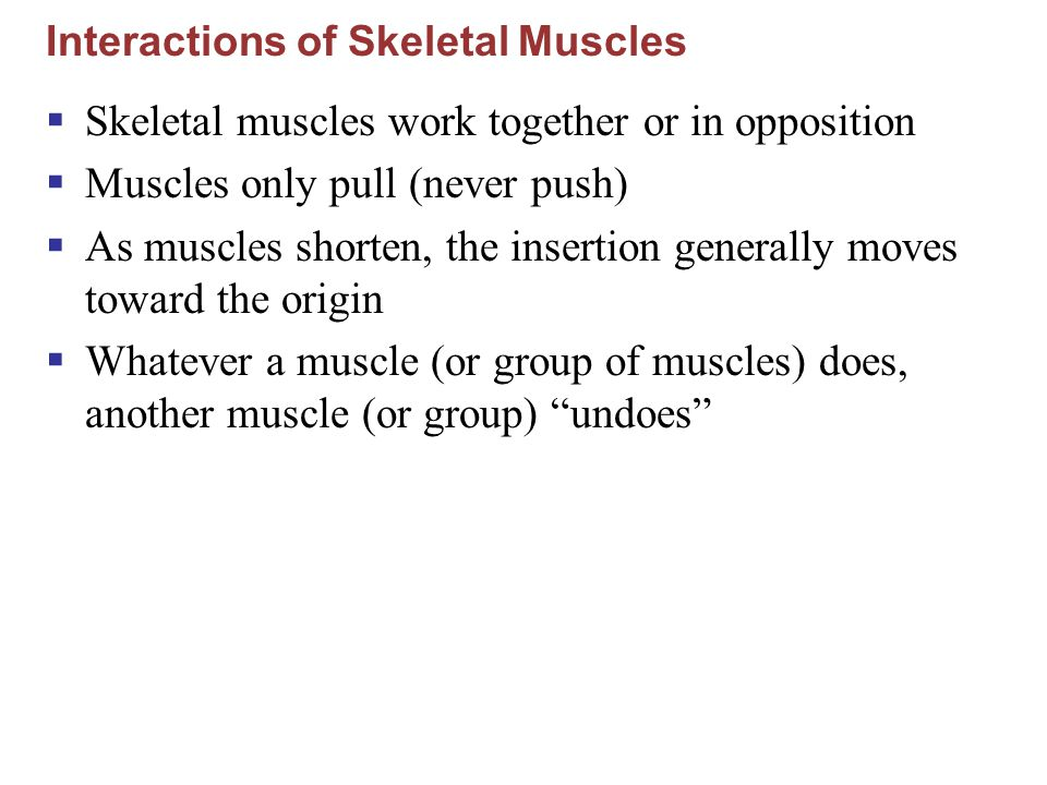 Interactions of Skeletal Muscles  Skeletal muscles work together or in opposition  Muscles only pull (never push)  As muscles shorten, the insertio