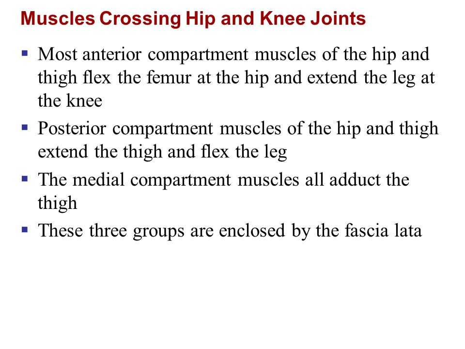 Muscles Crossing Hip and Knee Joints  Most anterior compartment muscles of the hip and thigh flex the femur at the hip and extend the leg at the knee