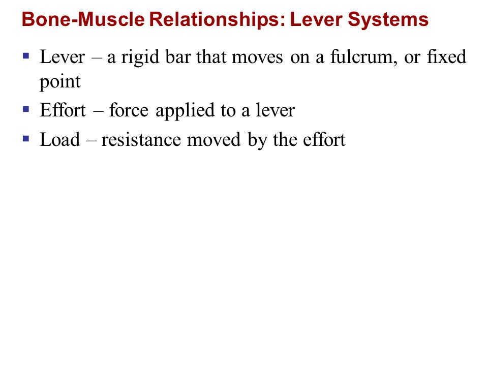 Bone-Muscle Relationships: Lever Systems Figure 10.2a  Mechanical advantage  Effort is less than load