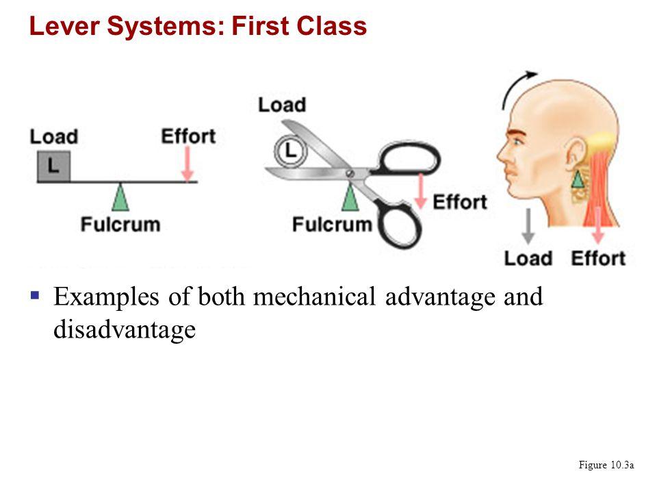 Lever Systems: Second Class Figure 10.3b  Always a mechanical advantage
