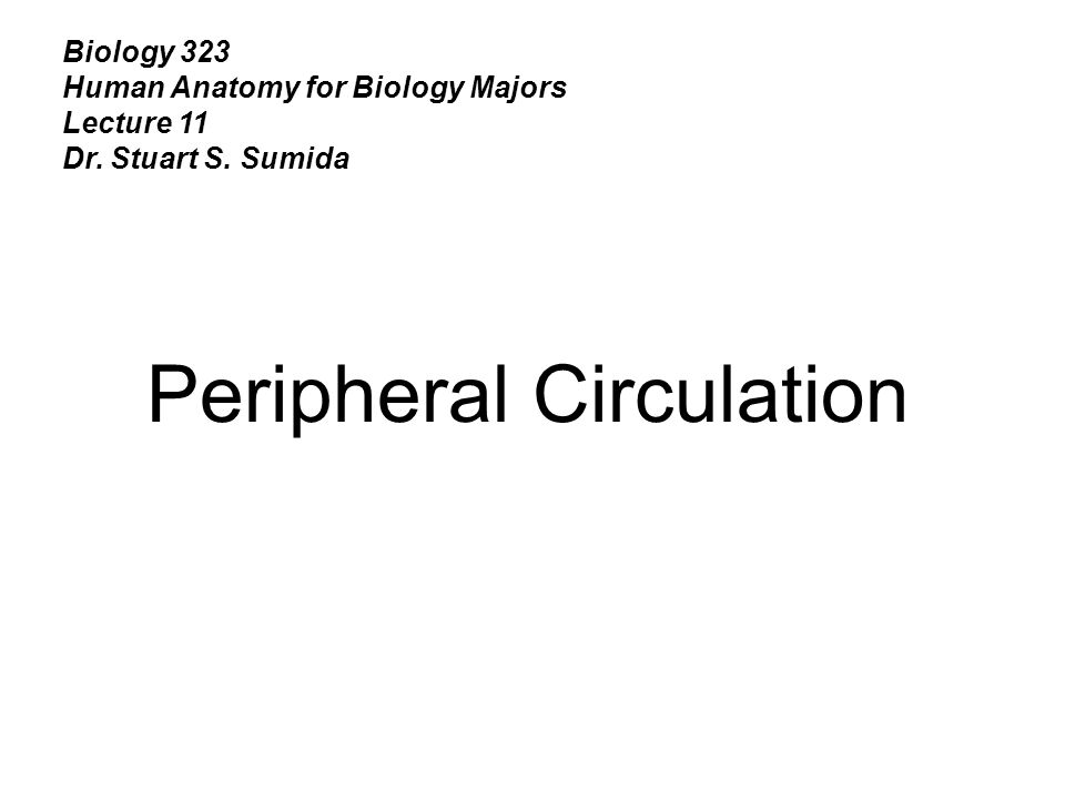 Biology 323 Human Anatomy for Biology Majors Lecture 11 Dr. Stuart S. Sumida Peripheral Circulation