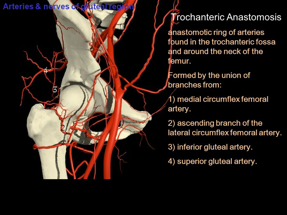 Trochanteric Anastomosis anastomotic ring of arteries found in the trochanteric fossa and around the neck of the femur. Formed by the union of branche