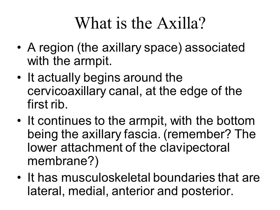 What is the Axilla? A region (the axillary space) associated with the armpit. It actually begins around the cervicoaxillary canal, at the edge of the