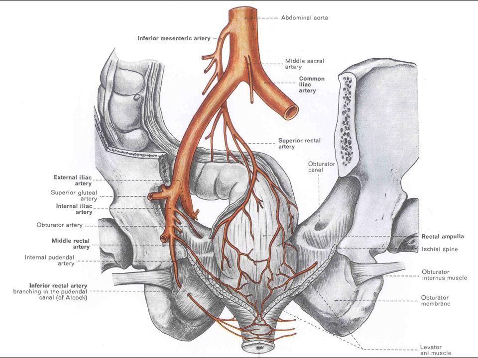 Medial—Serratus anterior muscle Lateral—Intertubercular sulcus.