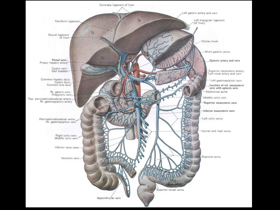 MUSCLES Teres major M Latissimus dorsi M Subscapularis M Pectoralis major M Pectoralis minor M Serratus anterior M Major structures inside: Axillary sheath and contents.