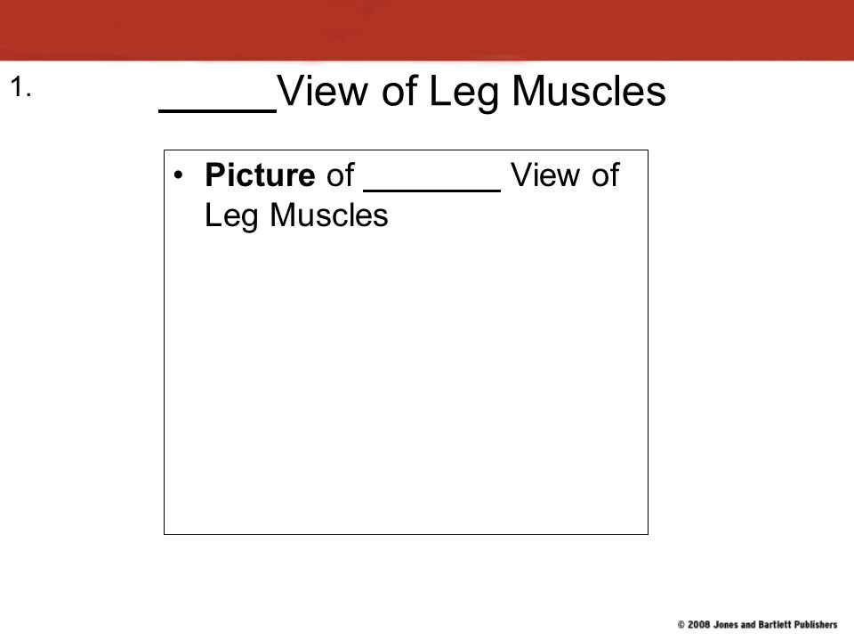 View of Leg Muscles Picture of View of Leg Muscles 1.