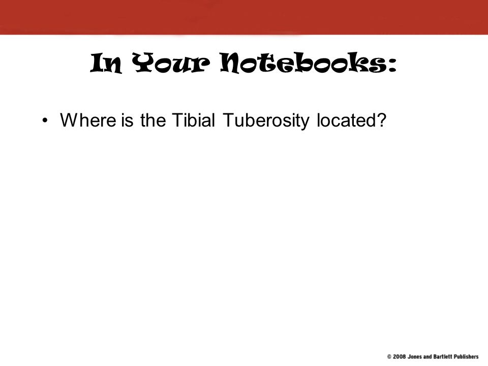 In Your Notebooks: Where is the Tibial Tuberosity located?