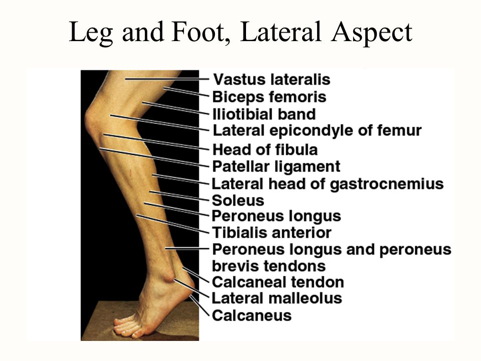 Leg and Foot, Lateral Aspect