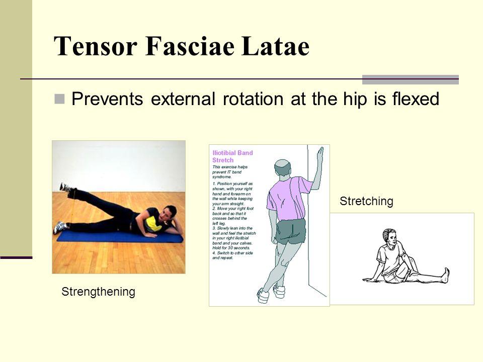 Tensor Fasciae Latae O: iliac crest I: iliotibial (I.T.) band Actions: Flexion of the hip Internal rotation Abduction of the hip